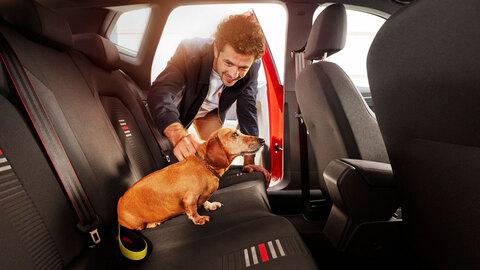 Descubre cómo es posible llevar a tu mascota en el coche sin peligro